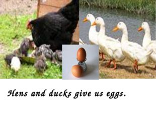 Hens and ducks give us eggs.