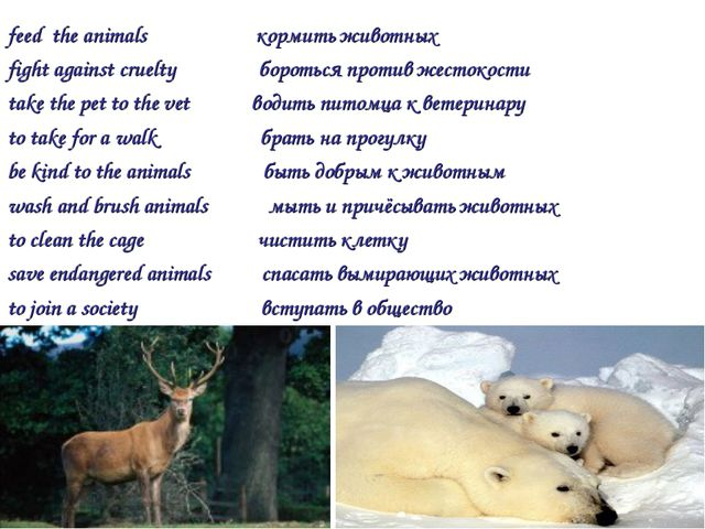 feed the animals кормить животных fight against cruelty бороться против жесто...