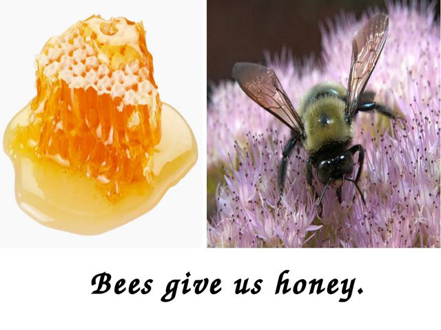 Bees give us honey.
