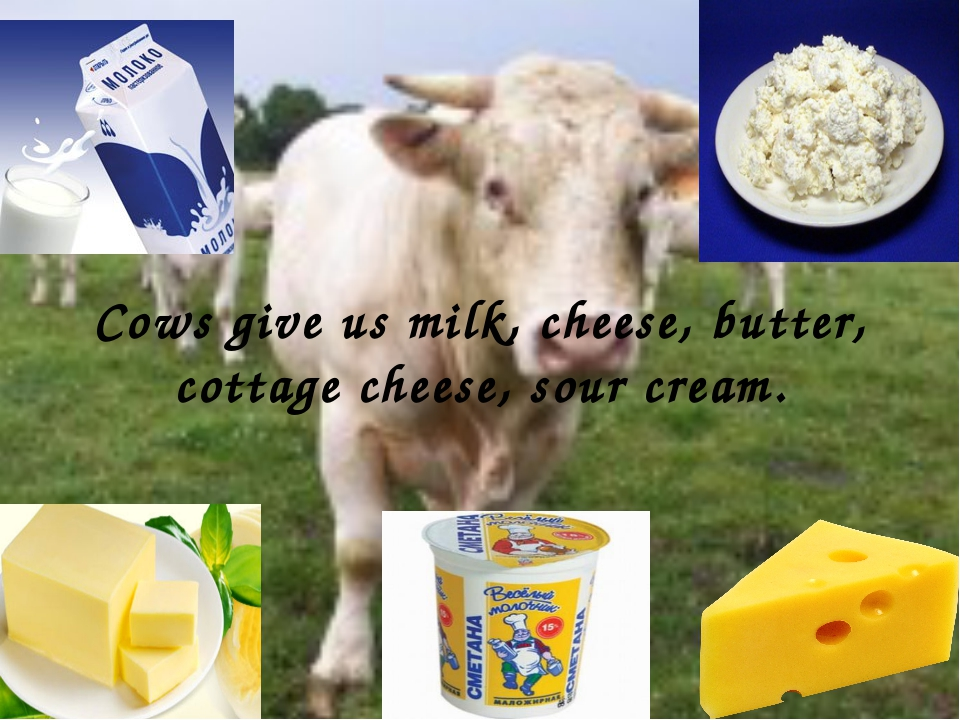 Cows give us milk, cheese, butter, cottage cheese, sour cream.