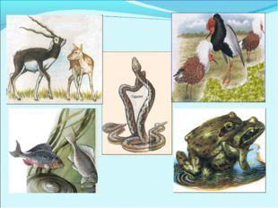 Размножение – способность живых организмов воспроизводить себе подобных, обес