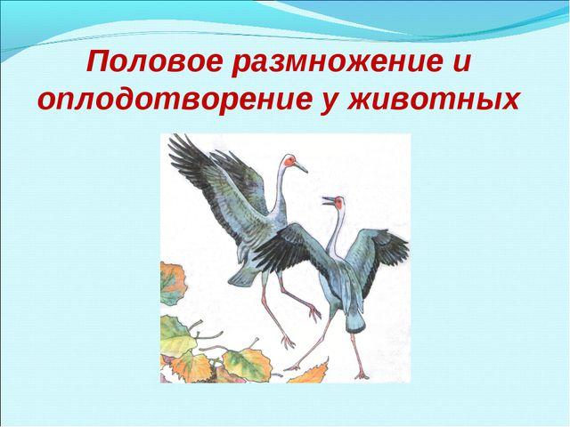 Половое размножение и оплодотворение у животных