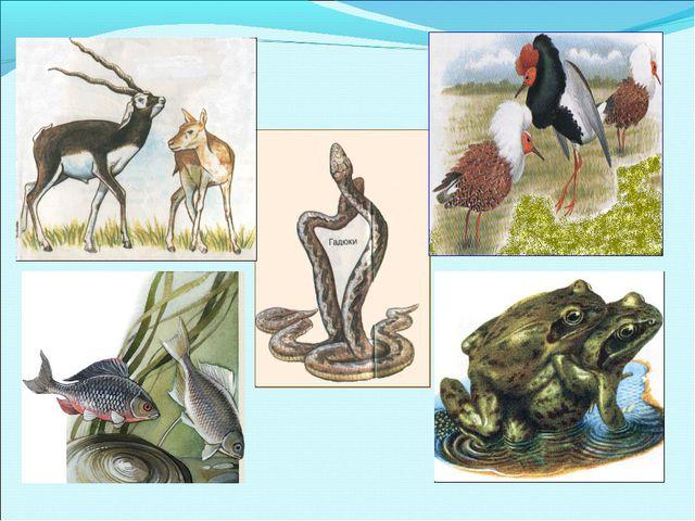 Размножение – способность живых организмов воспроизводить себе подобных, обес...