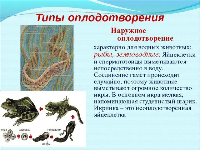 Типы оплодотворения Наружное оплодотворение характерно для водных животных: р...