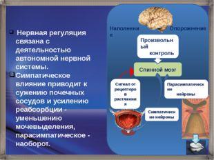 Наполнение Опорожнение Спинной мозг Сигнал от рецепторов растяжения Произвол