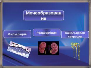 Мочеобразование Фильтрация Реадсорбция Канальцевая секреция