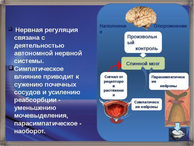 Наполнение Опорожнение Спинной мозг Сигнал от рецепторов растяжения Произвол...