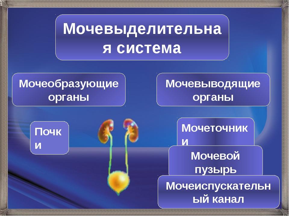Мочевыделительная система Мочеобразующие органы Мочевыводящие органы Почки Мо...
