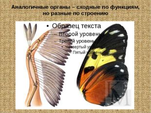 Аналогичные органы – сходные по функциям, но разные по строению