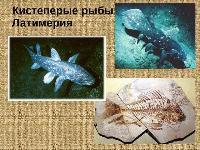 Кистеперые рыбы. Латимерия