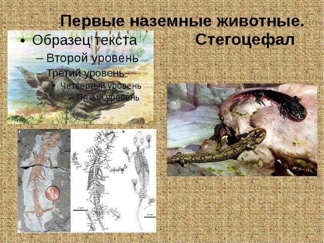 Первые наземные животные. Стегоцефал