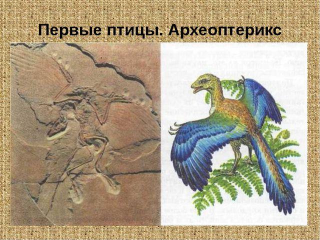 Первые птицы. Археоптерикс
