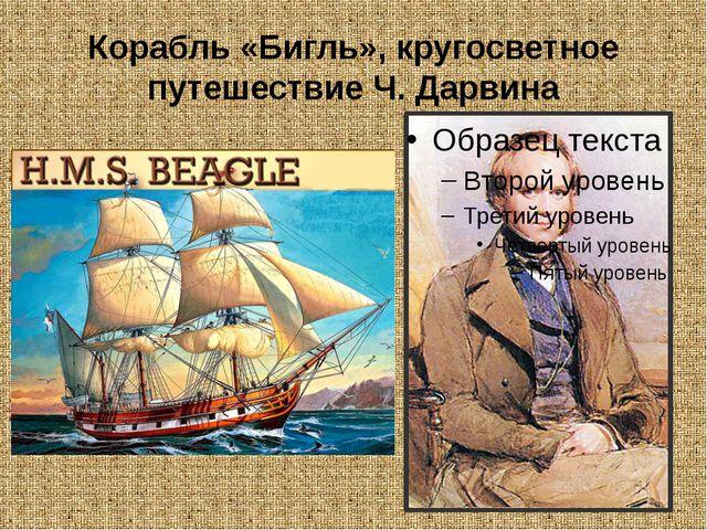 Корабль «Бигль», кругосветное путешествие Ч. Дарвина