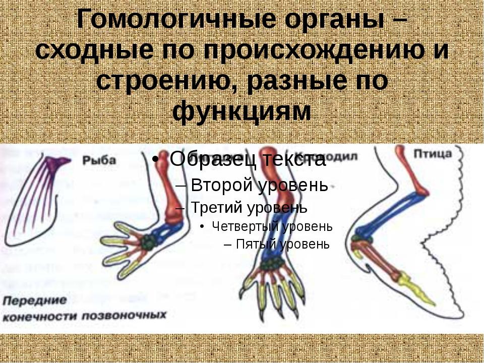 Гомологичные органы – сходные по происхождению и строению, разные по функциям