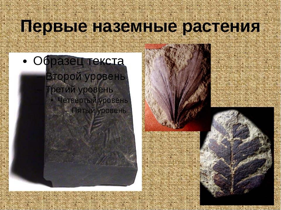 Первые наземные растения