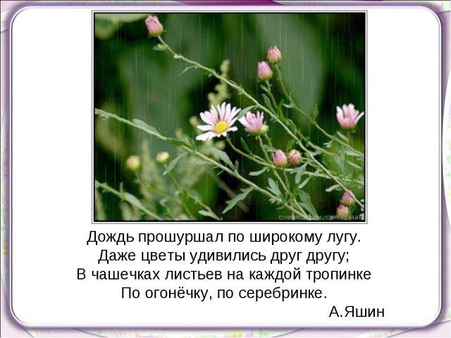 Дождь прошуршал по широкому лугу. Даже цветы удивились друг другу; В чашечках...