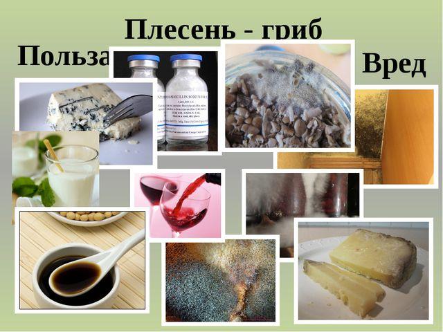 Плесень - гриб Польза Вред