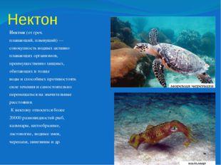 Нектон Нектон(от греч. плавающий, плывущий)— совокупность водных активно пл
