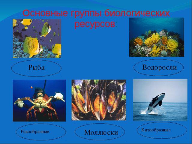 Основные группы биологических ресурсов: Рыба Ракообразные Водоросли Моллюски...