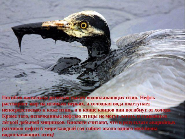 Погибли несколько десятков тысяч водоплавающих птиц. Нефть растворяет жир на...