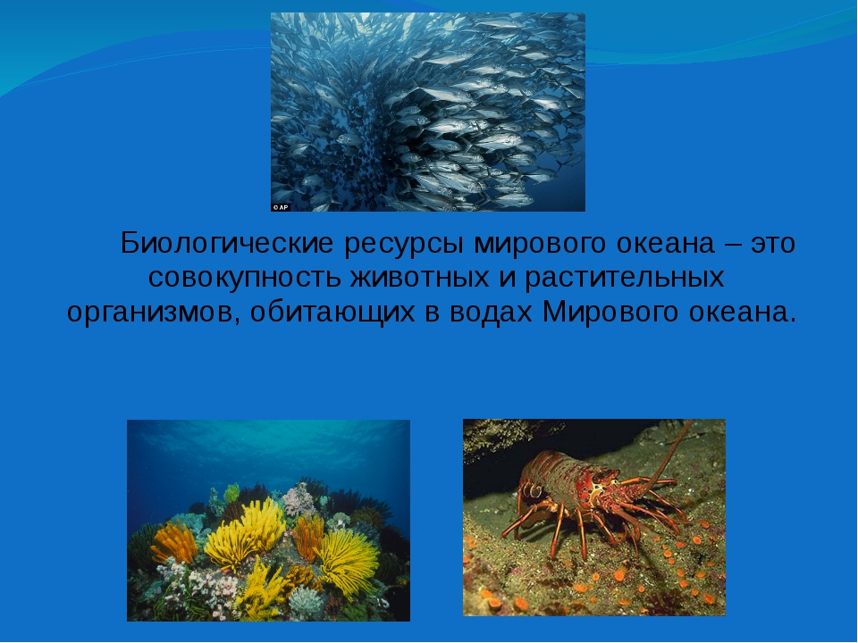 Биологические ресурсы мирового океана – это совокупность животных и растител...