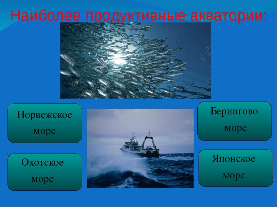Наиболее продуктивные акватории:  Норвежское море Охотское море Берингово мо...
