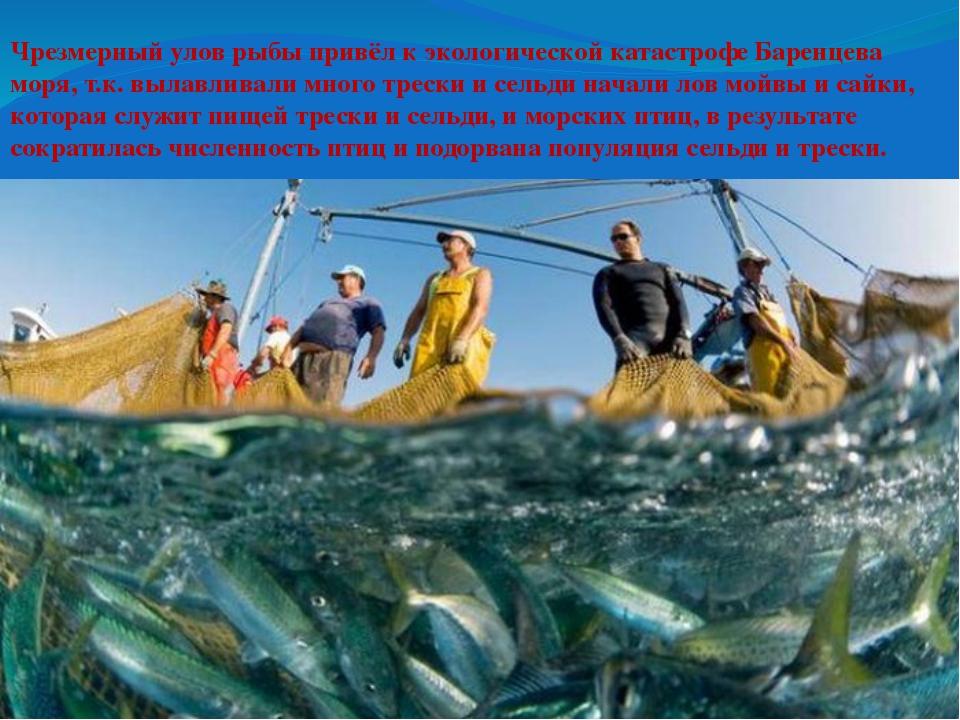 Чрезмерный улов рыбы привёл к экологической катастрофе Баренцева моря, т.к....