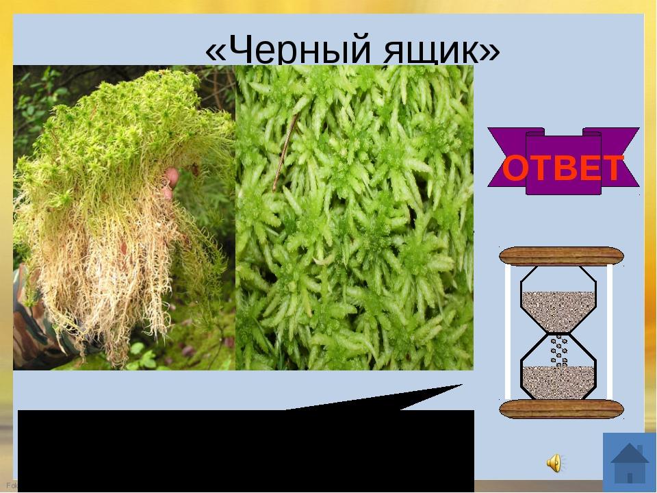 8. Конкурс «Разгадай кроссворд» FokinaLida.75@mail.ru