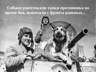Собаки уничтожали танки противника во время боя, выносили с фронта раненых...