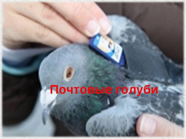 ВОПРОС 2 Почтовые голуби