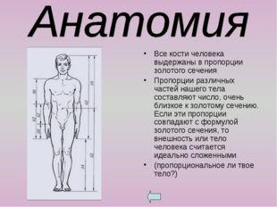 Все кости человека выдержаны в пропорции золотого сечения. Пропорции различны