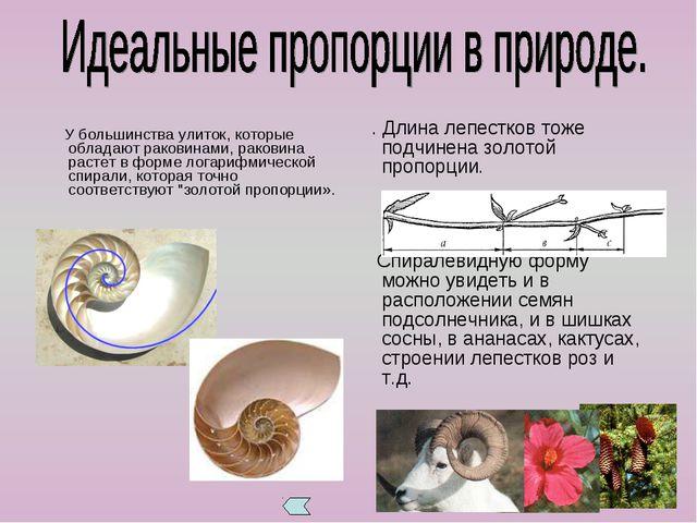 У большинства улиток, которые обладают раковинами, раковина растет в форме л...