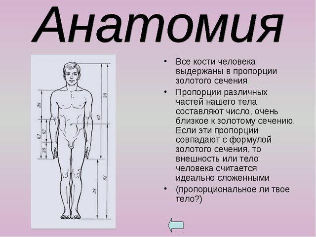 Все кости человека выдержаны в пропорции золотого сечения. Пропорции различны...