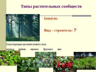 Типы растительных сообществ Еловый лес: Вид – строитель: ? Сопутствующие раст
