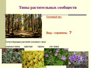 Типы растительных сообществ Сосновый лес: Вид – строитель: ? Сопутствующие ра