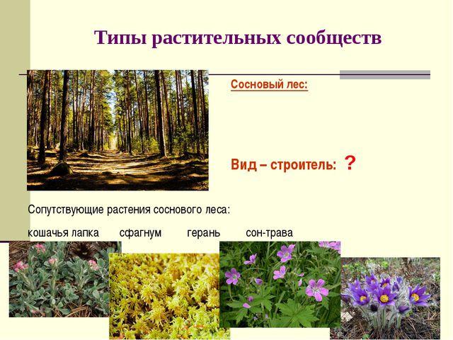 Типы растительных сообществ Сосновый лес: Вид – строитель: ? Сопутствующие ра...
