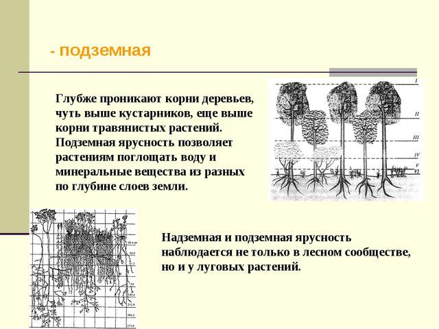 - подземная Глубже проникают корни деревьев, чуть выше кустарников, еще выше...