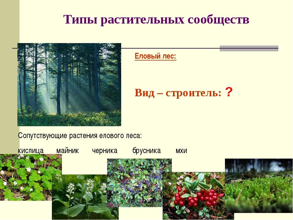 Типы растительных сообществ Еловый лес: Вид – строитель: ? Сопутствующие раст...