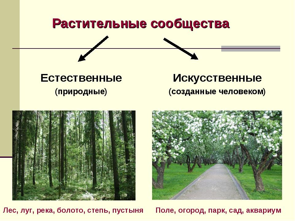 Растительные сообщества Естественные (природные) Искусственные (созданные чел...