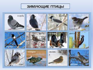 галка голубь ворона воробей сорока дрозд глухарь дятел рябчик овсянка тетерев