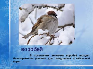 воробей В поселениях человека воробей находит благоприятные условия для гнезд