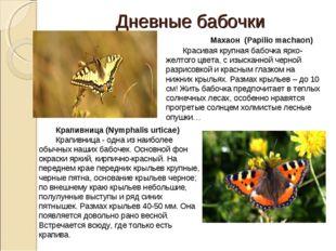 Дневные бабочки  Махаон (Papiliomachaon) Красивая крупная бабочка ярко-жел