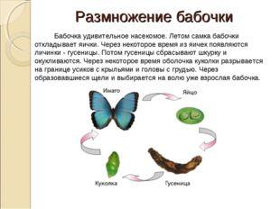 Размножение бабочки  Бабочка удивительное насекомое. Летом самка бабочки отк