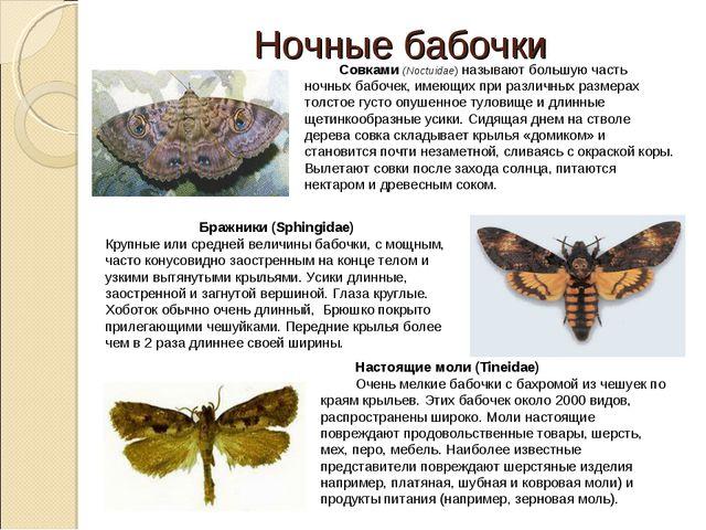 Ночные бабочки Бражники (Sphingidae) Крупные или средней величины бабочки, с...