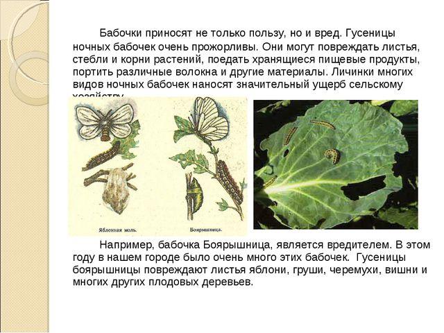 Бабочки приносят не только пользу, но и вред. Гусеницы ночных бабочек очень...