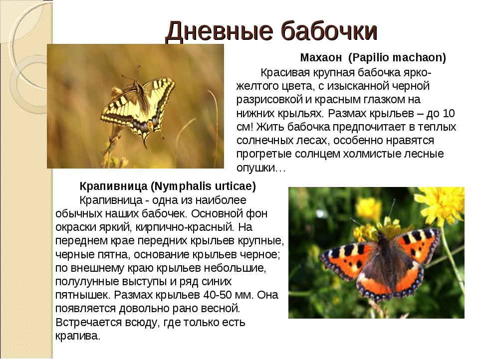 Дневные бабочки  Махаон (Papiliomachaon) Красивая крупная бабочка ярко-жел...