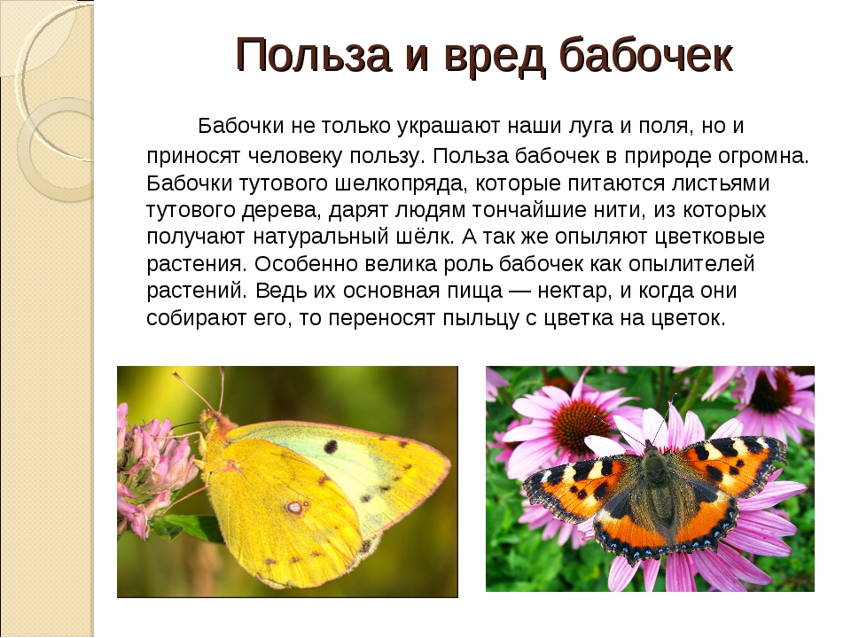 Польза и вред бабочек Бабочки не только украшают наши луга и поля, но и при...
