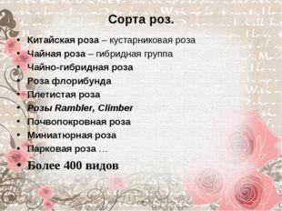 Сорта роз. Китайская роза – кустарниковая роза Чайная роза – гибридная группа