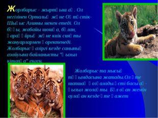 Жорлбарыс - жыртқыш аң. Ол негізінен Орталық және Оңтүстік-Шығыс Азияны мекен