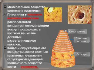 Межклеточное вещество сложено в пластинки. Пластинки в плотном костном вещест